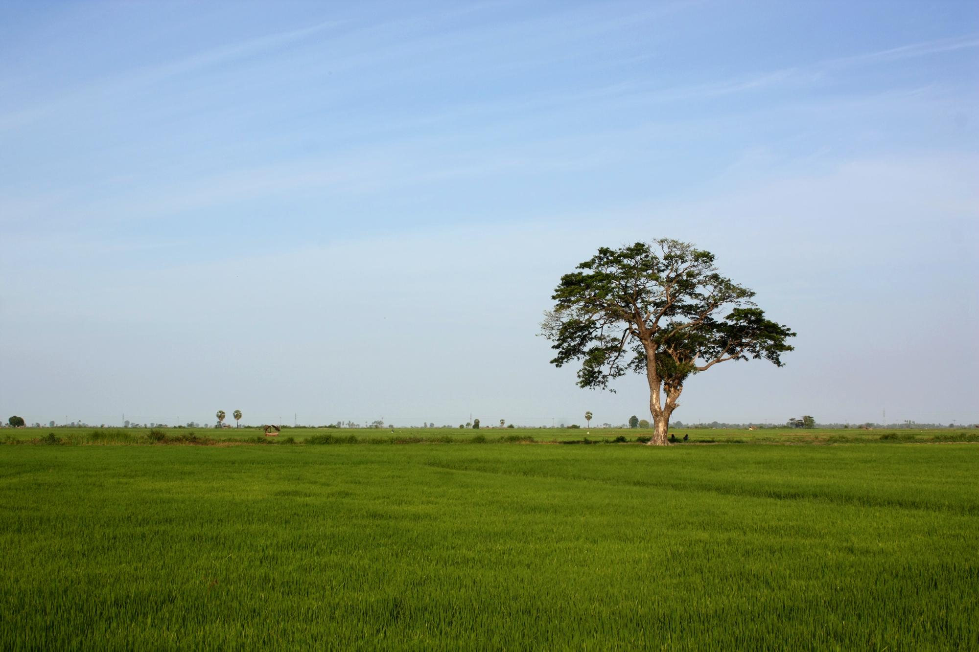 Ampara Sri Lanka  city images : amparai, Northern, Sri Lanka What happens in amparai right now!