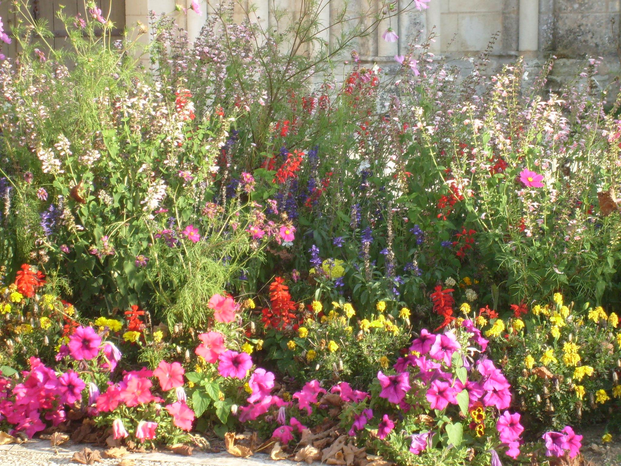 Image De Parterre De Fleurs file:parterre de fleurs à tesson - panoramio - wikimedia