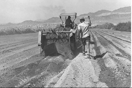 מכינים את השדה