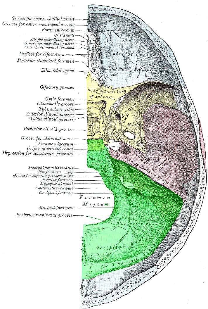 Posterior Cranial Fossa Wikipedia