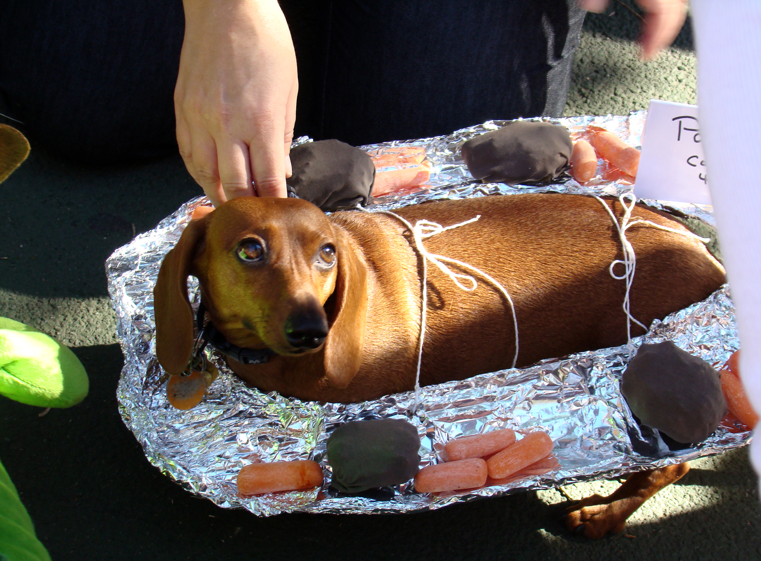 Image Result For Barbecue Dog