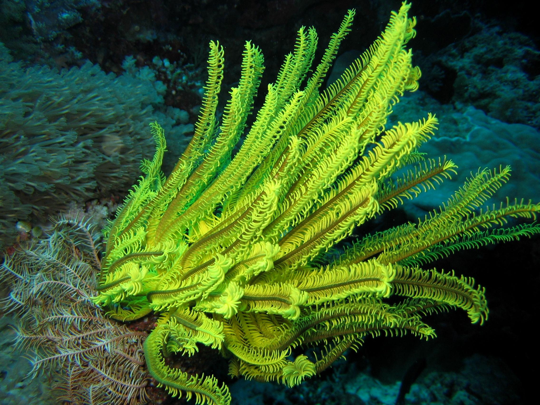 95 Gambar Hewan Dan Tumbuhan Laut HD Terbaru