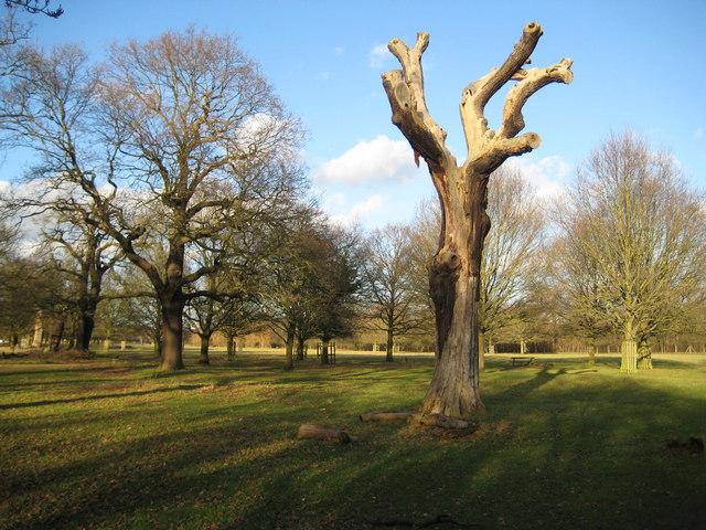 Richmond Park - geograph.org.uk - 676200