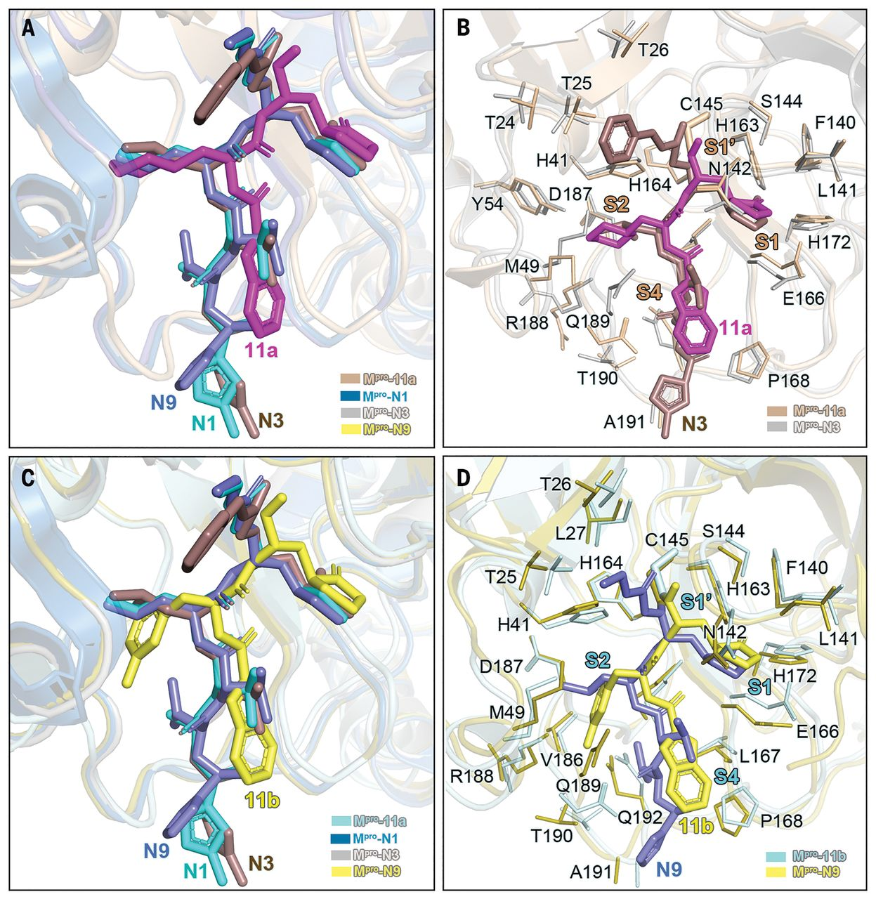 Structure-based design of antiviral drug candidates targeting the SARS-CoV-2 main protease - F4.jpg