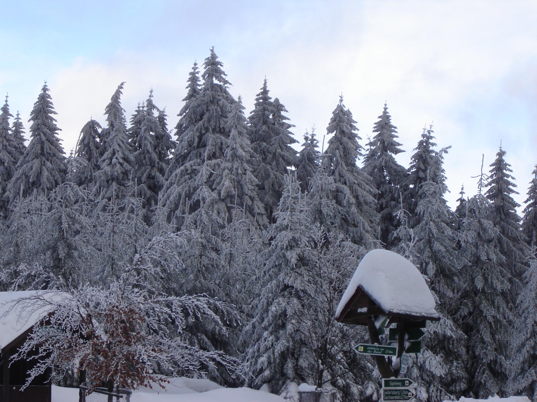 Der Thüringer Wald im Winter. Rund 30Prozent der Staatsfläche sind bewaldet.