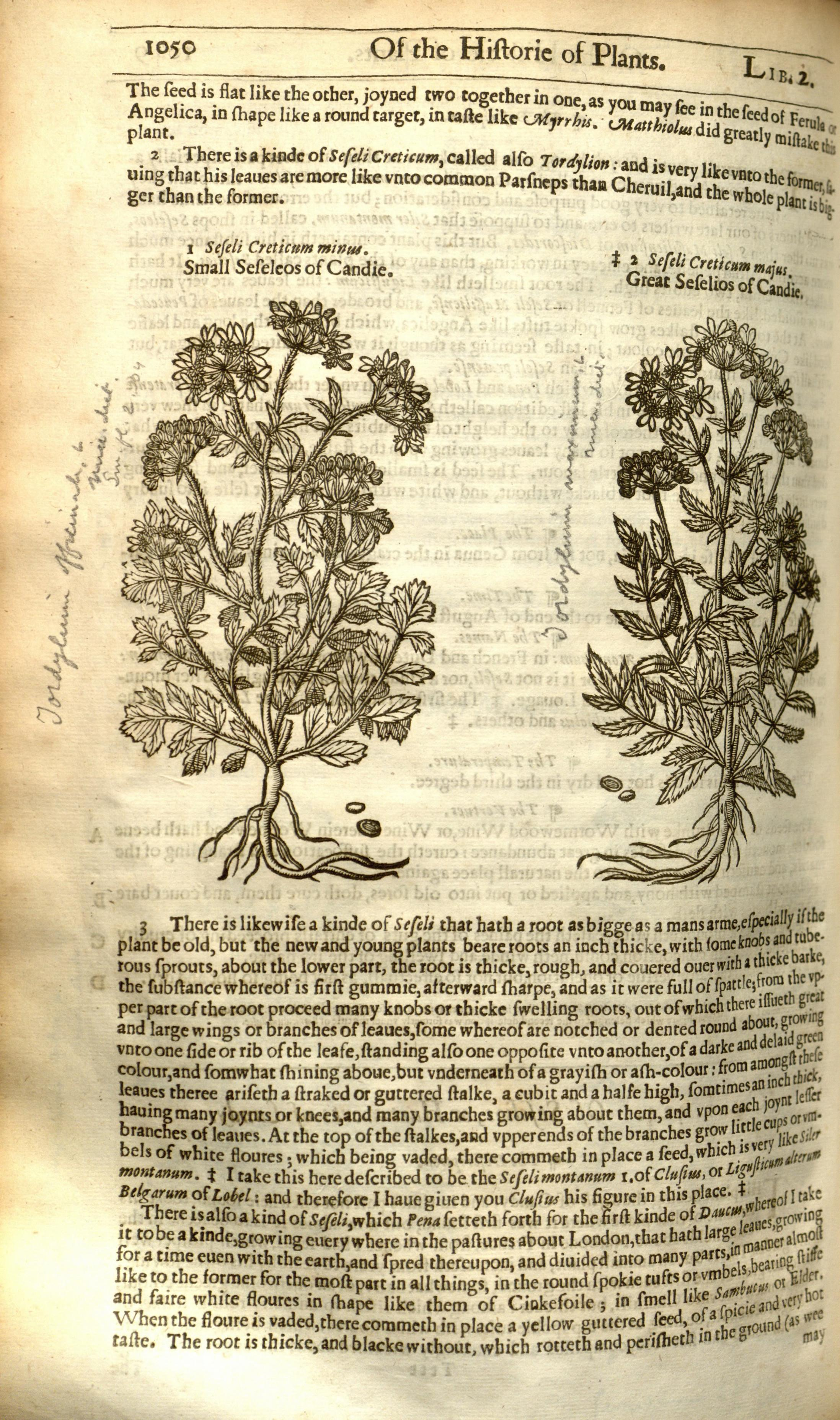 FileThe Herball Or Generall Historie Of Plantes Page 1050 BHL8437736