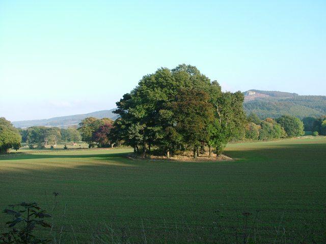 Trees in the shadow of Guisborough Forest - geograph.org.uk - 76817