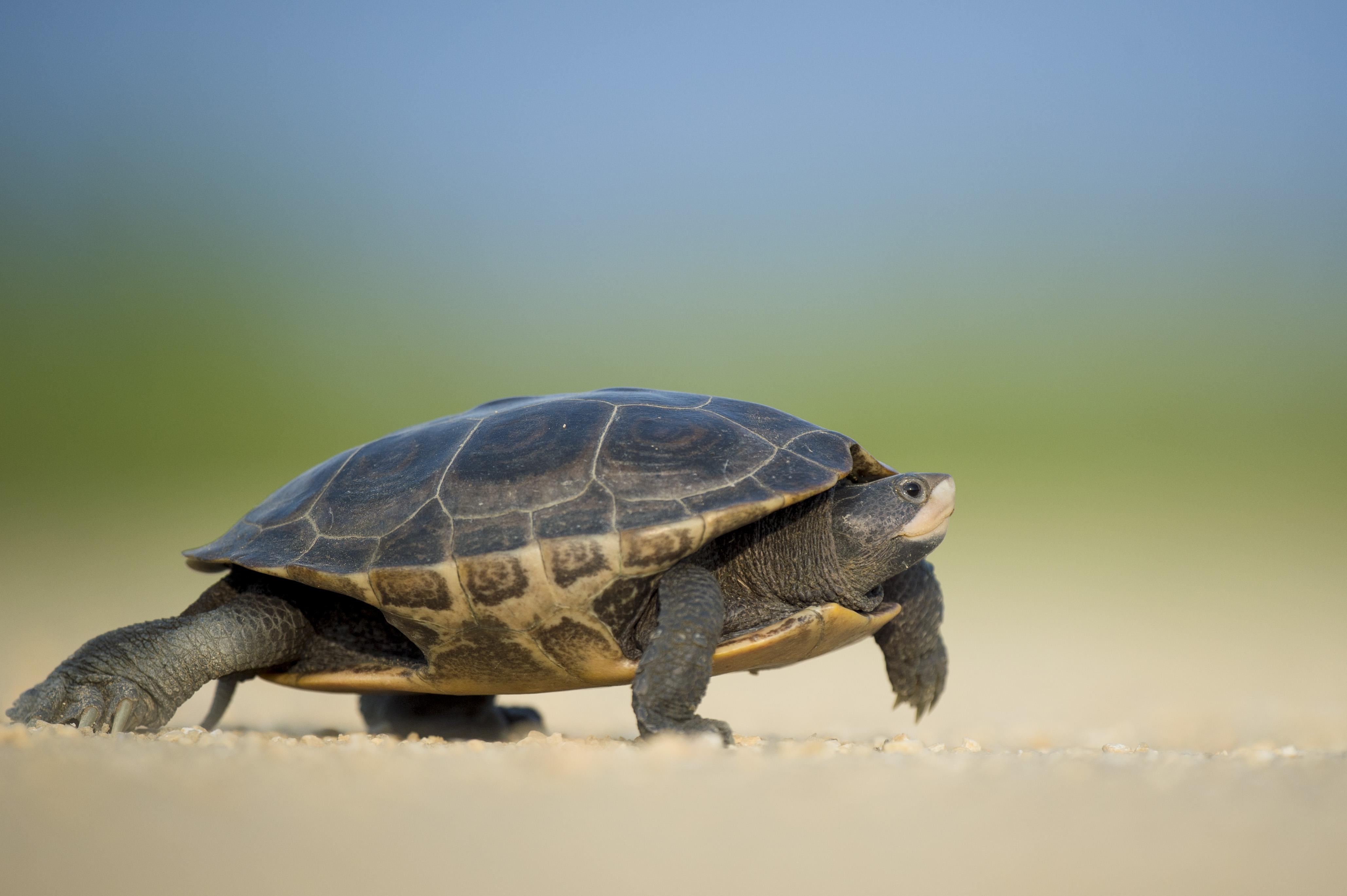 Image result for unsplash photo turtle