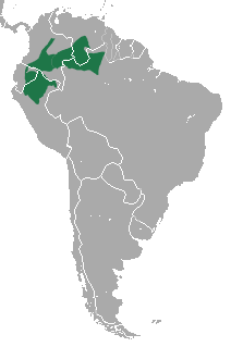 Datoteka:White-fronted Spider Monkey area.png