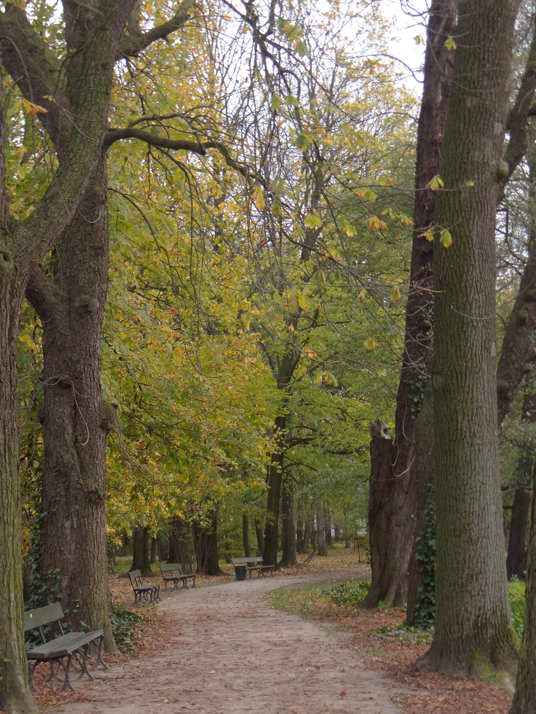 Filełazienki Park 06jpg Wikimedia Commons