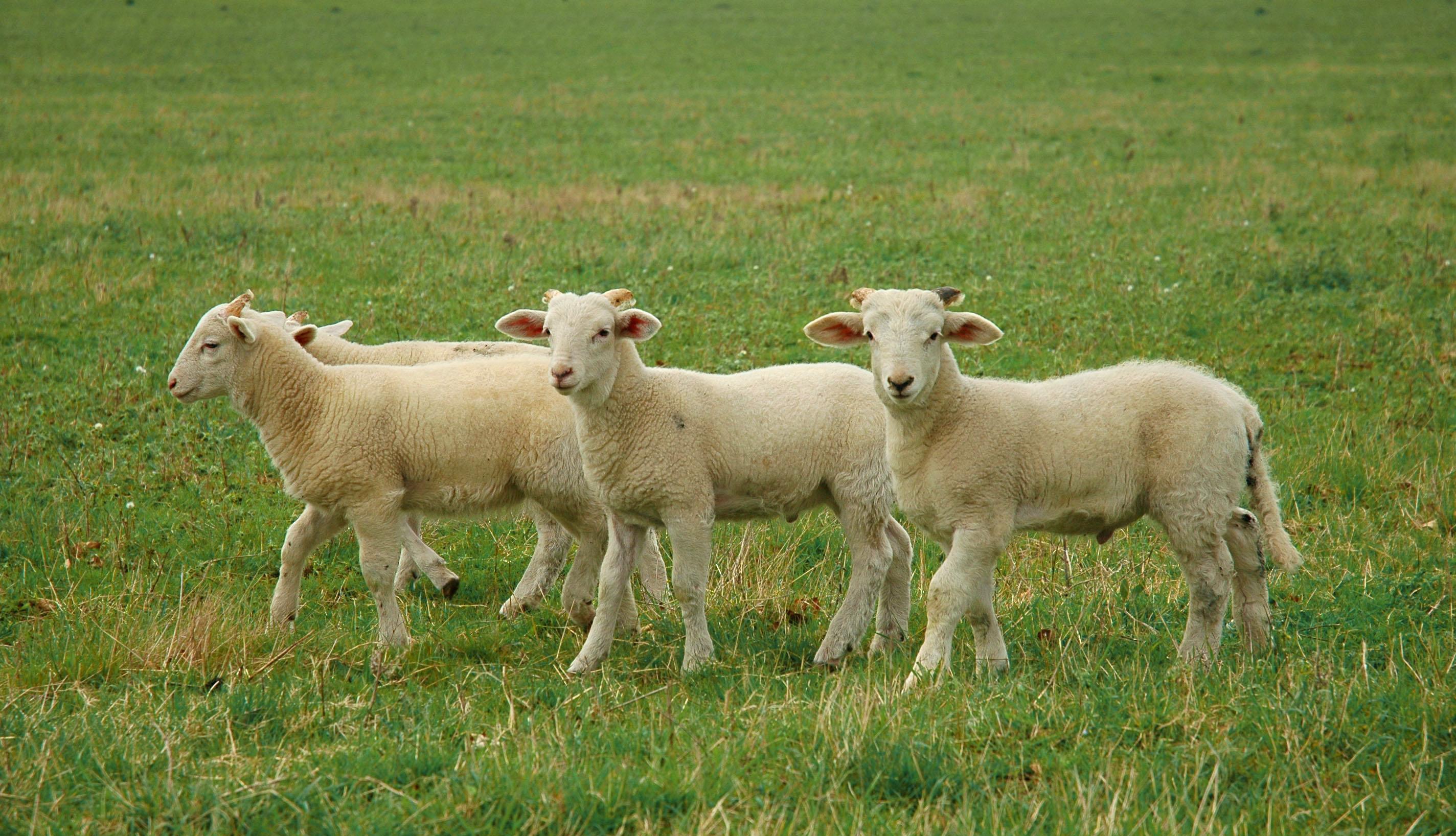 Feed My Sheep Soup Kitchen Gulfport Ms