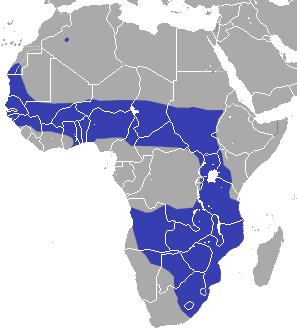 African Savanna Habitat Facts For Kids