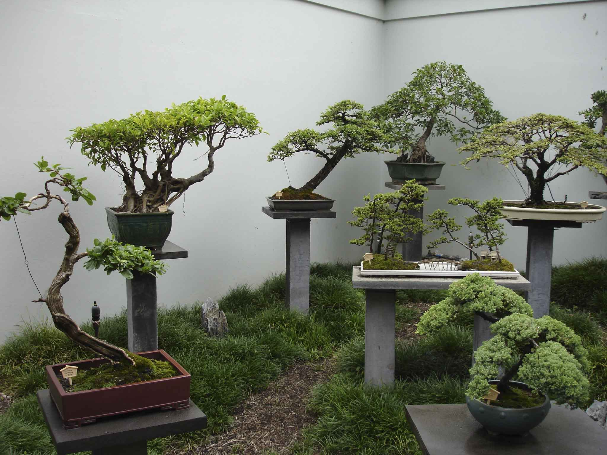 Bonsai historia fotos taringa - Video bonsai jardin japonais ...