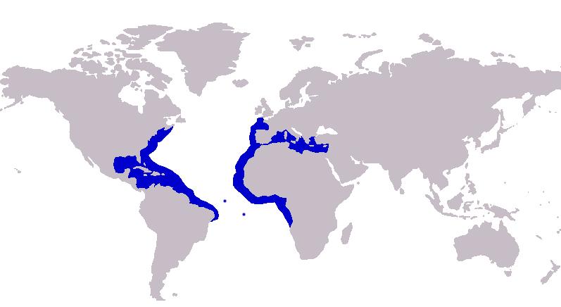 Caranx crysos distribution