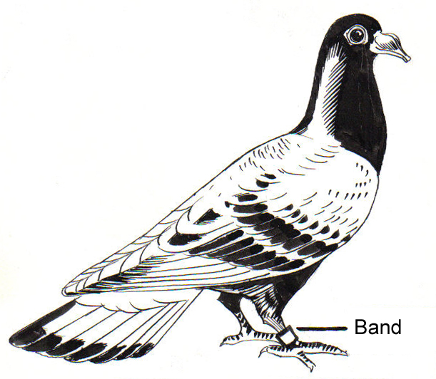 Carrier Pigeon (PSF)