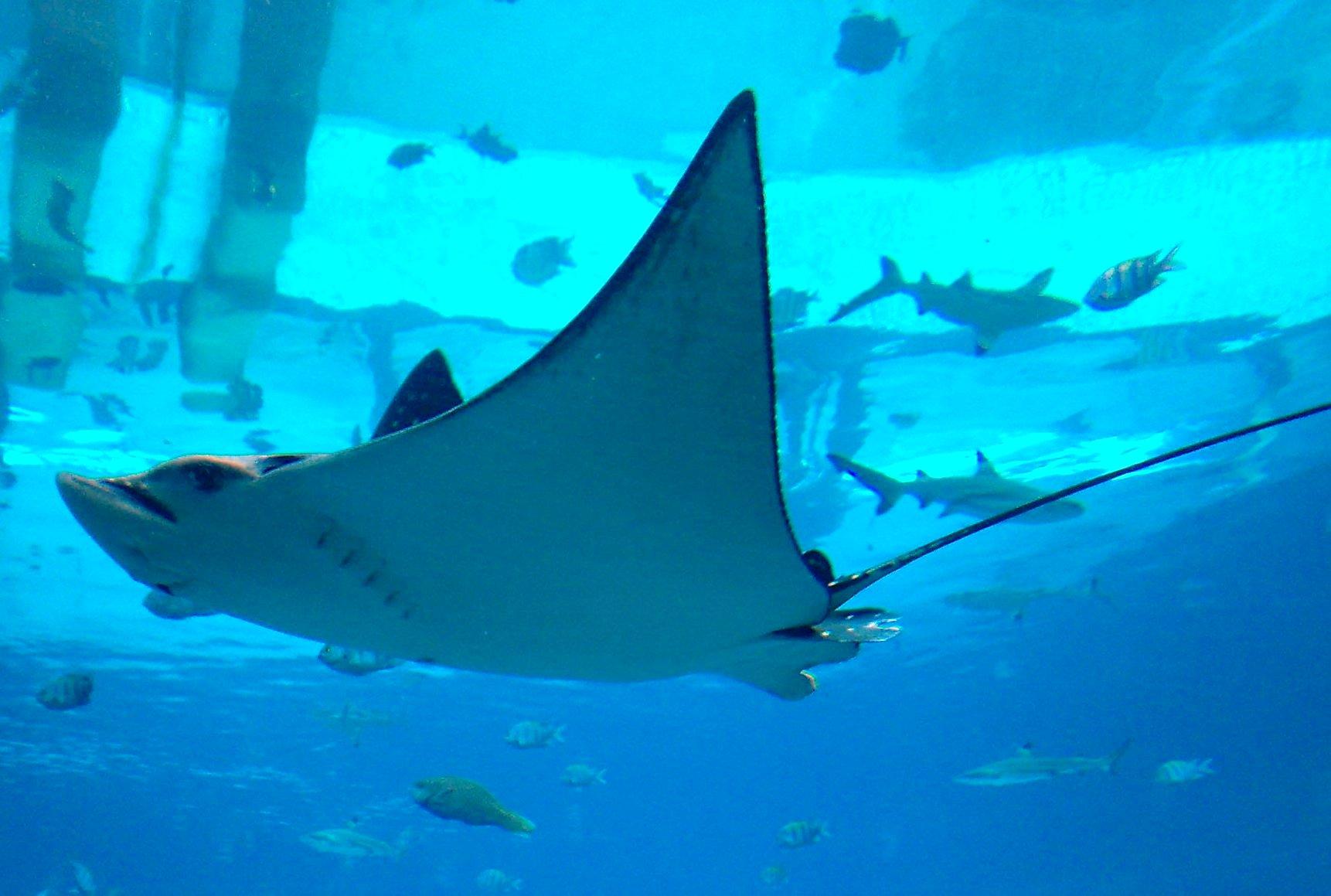 dubai atlantis aquarium 1000 aquarium ideas