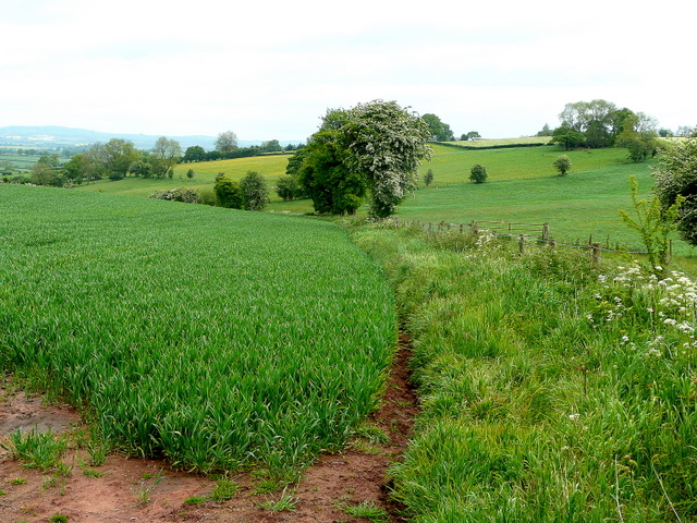 File:Edge of a cereal field - geograph.org.uk - 1315173.jpg