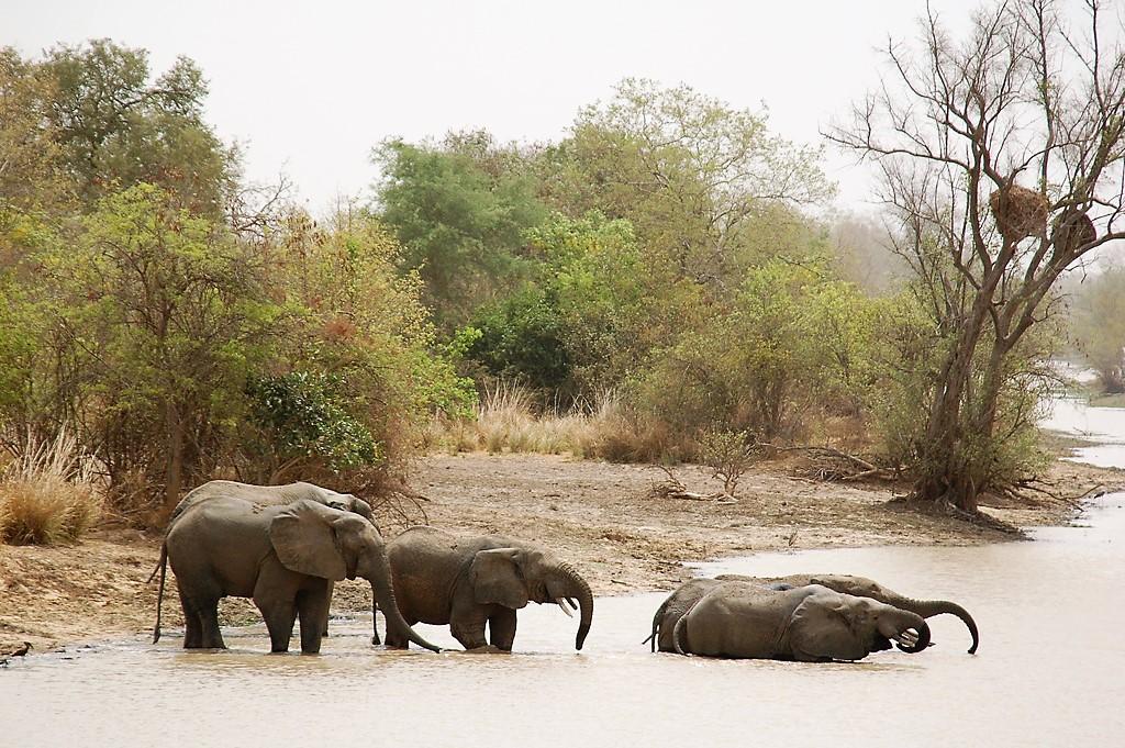 Εθνικό Πάρκο W του Νίγηρα