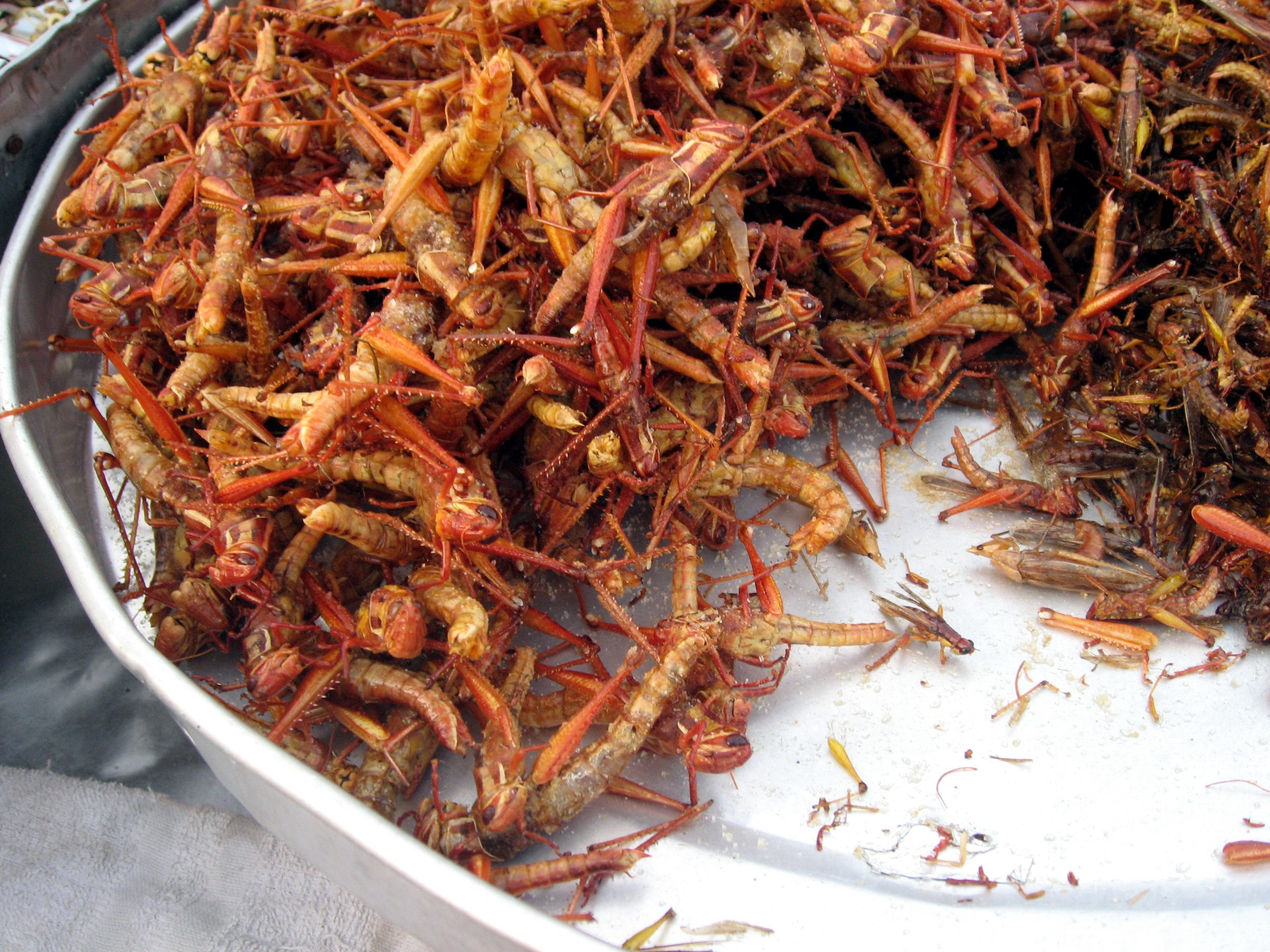 File:Fried grasshoppers in Bangkok.jpg - Wikimedia Commons