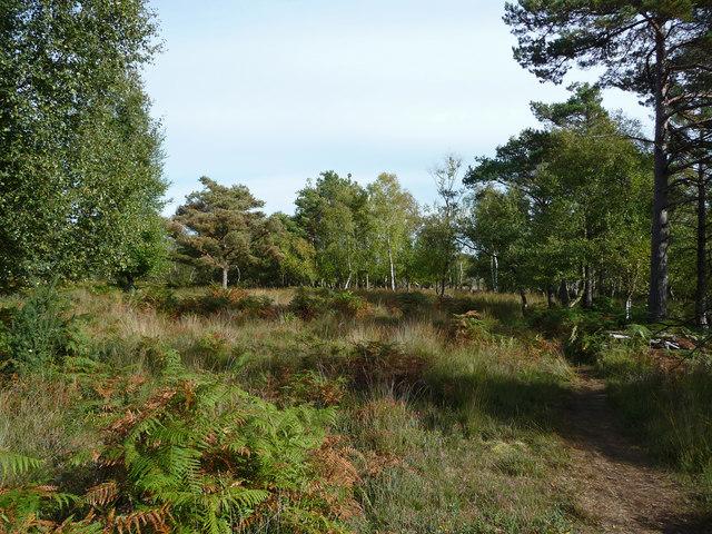 Heathland - woodland at Arne Nature Reserve - geograph.org.uk - 1769387