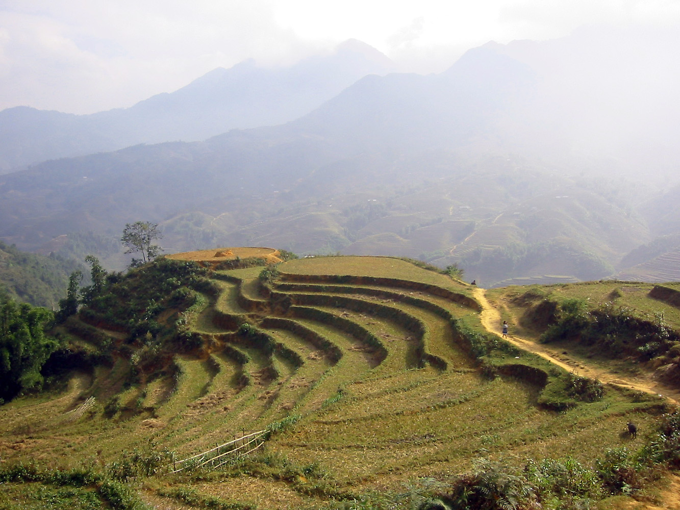 File landscape in sa pa vietnam jpg wikipedia for Sa landscaping