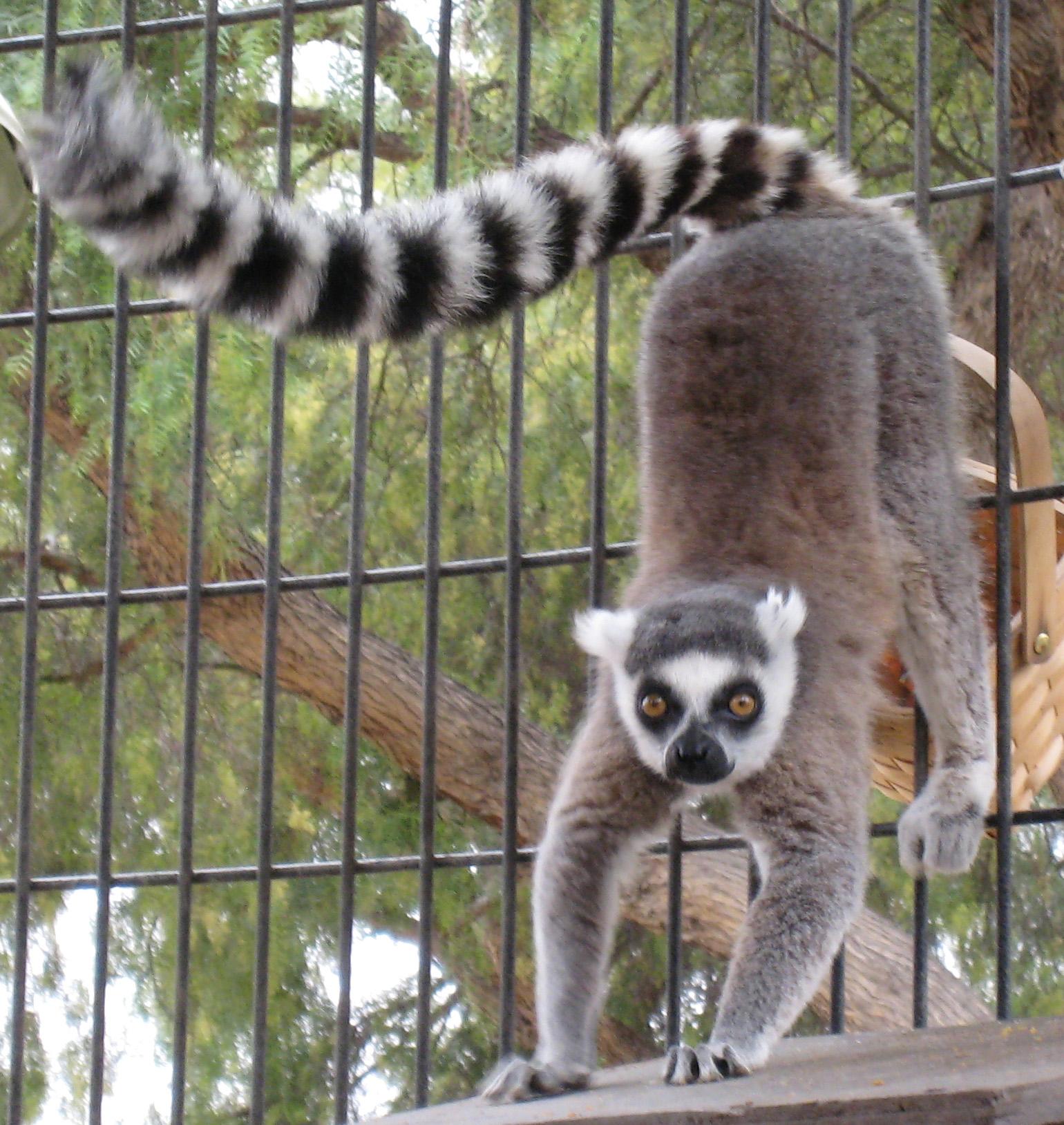 Image Result For Zoo Animals Habitat