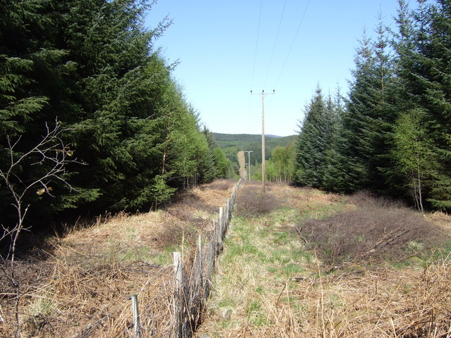 Line break through Potarch Wood. - geograph.org.uk - 418605