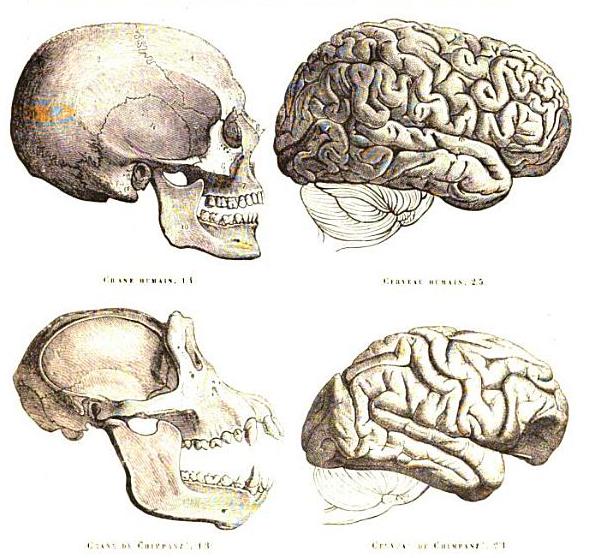 Brains Skull Skulls And Brains Not to