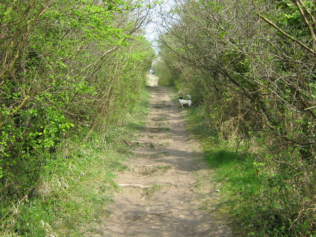 North Downs Way up to Otford Mount - geograph.org.uk - 1256057