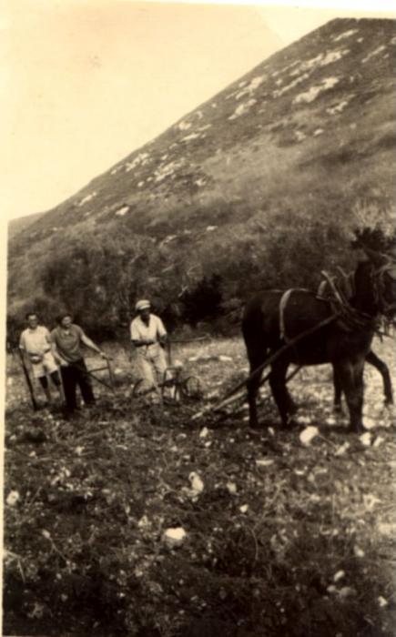 חריש עם סוס