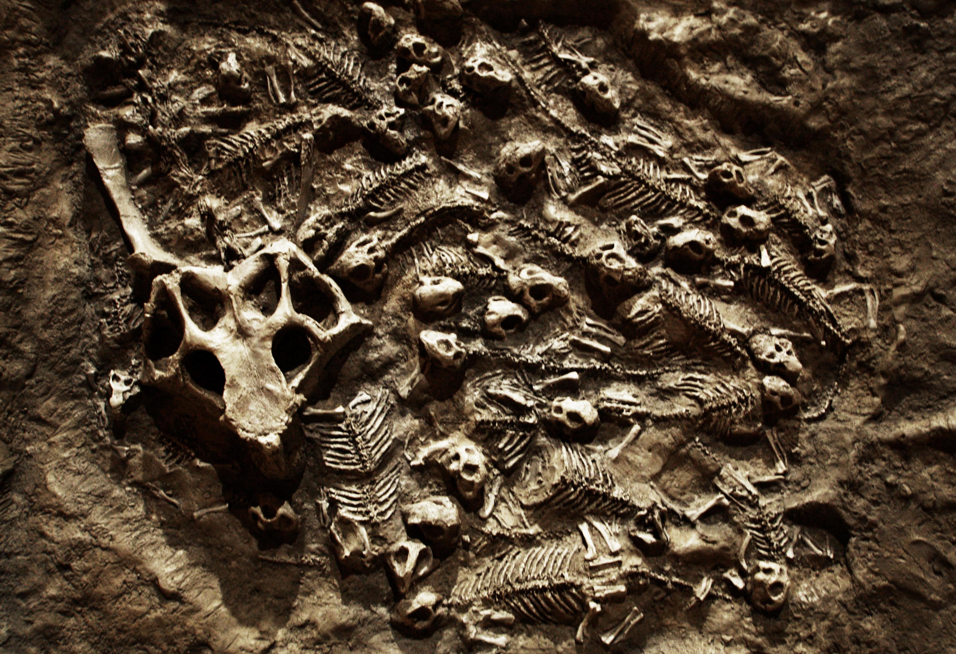 psittacosaurus nest.jpg