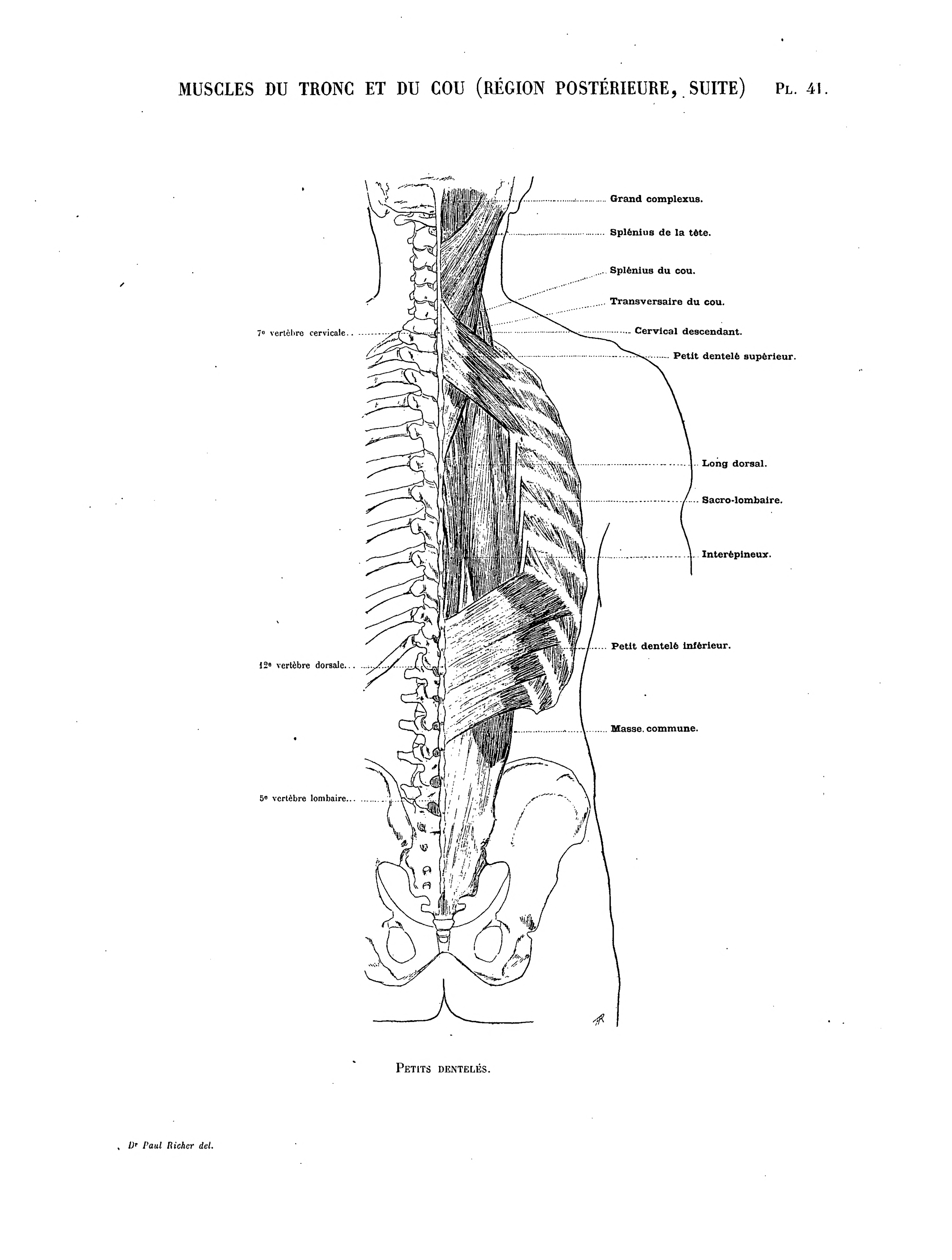 File:Richer - Anatomie artistique, 2 p. 48.png - Wikimedia Commons