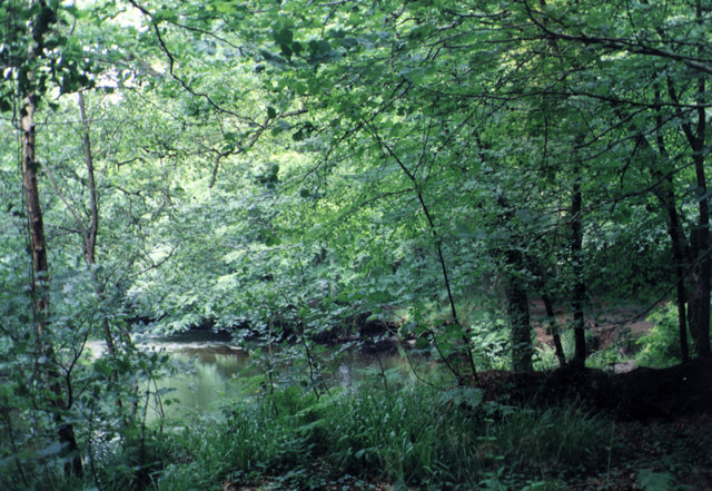 River Fowey in the Lanhydrock Woods - geograph.org.uk - 289033