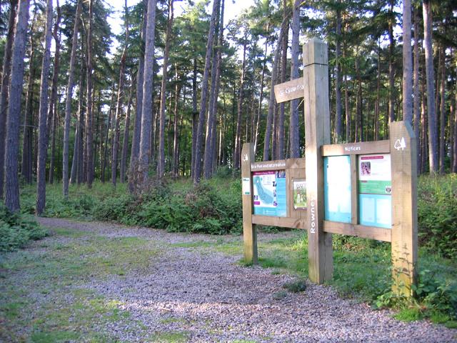 Rowney Warren pine woodland, Southill, Beds - geograph.org.uk - 174146