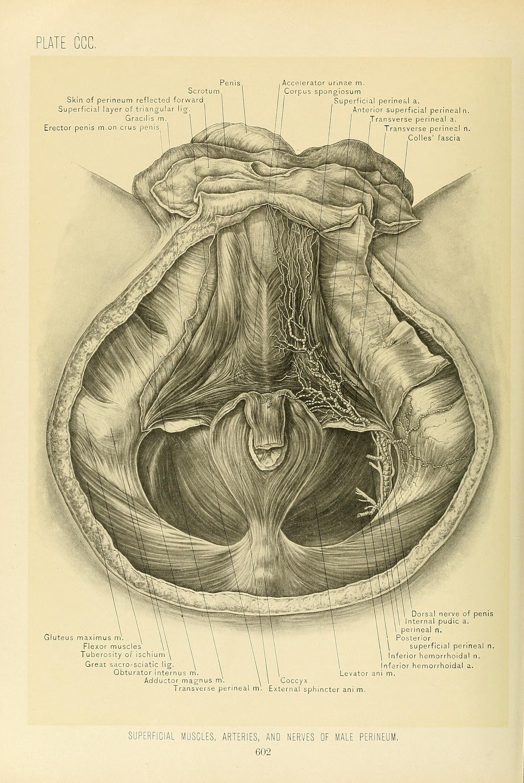 Heart Anatomy Quiz Medical Students - Anatomy Drawing Diagram