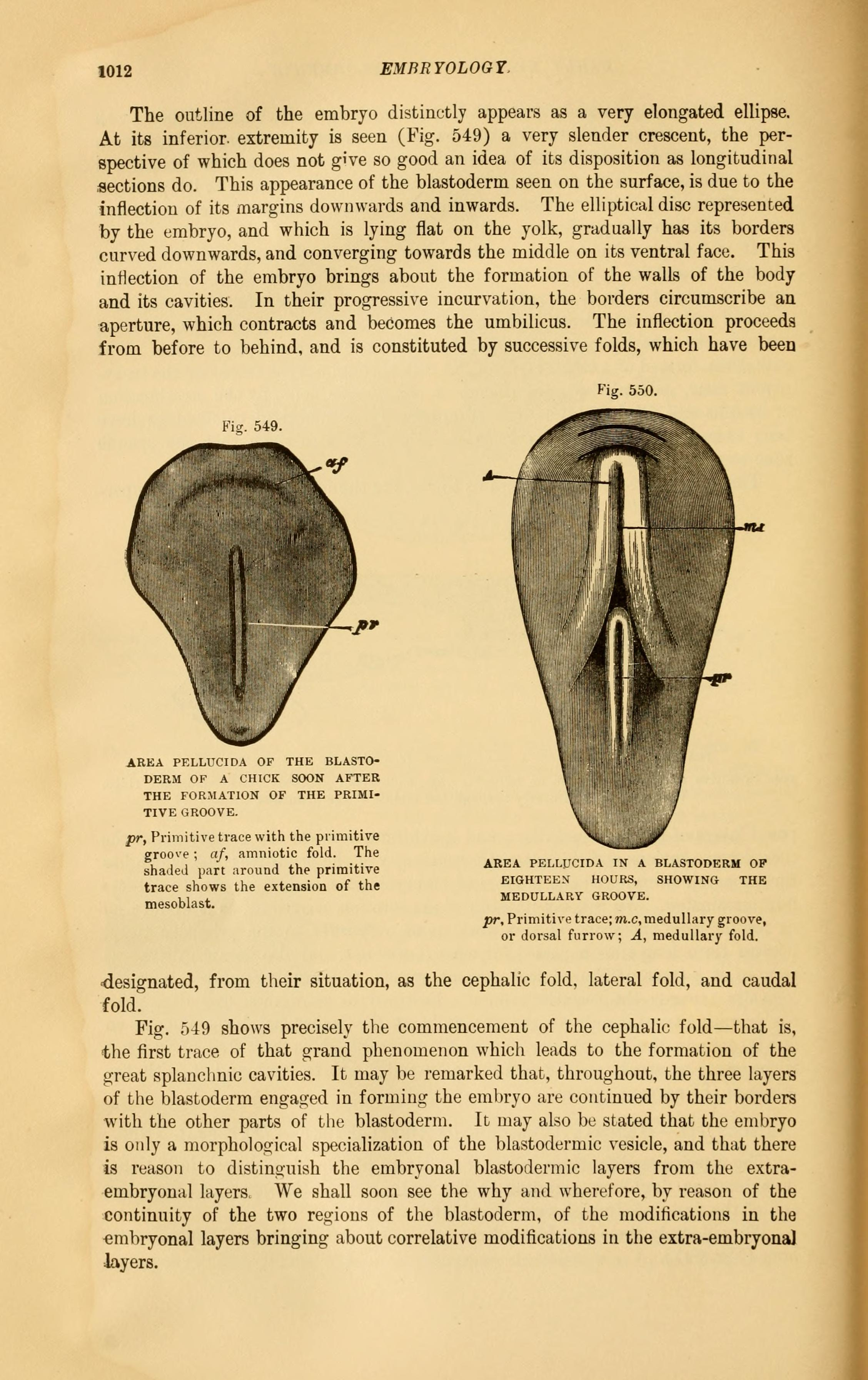 File:The comparative anatomy of the domesticated animals (Page 1012 ...