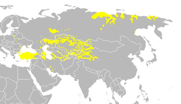 Turkic languages A török nyelv