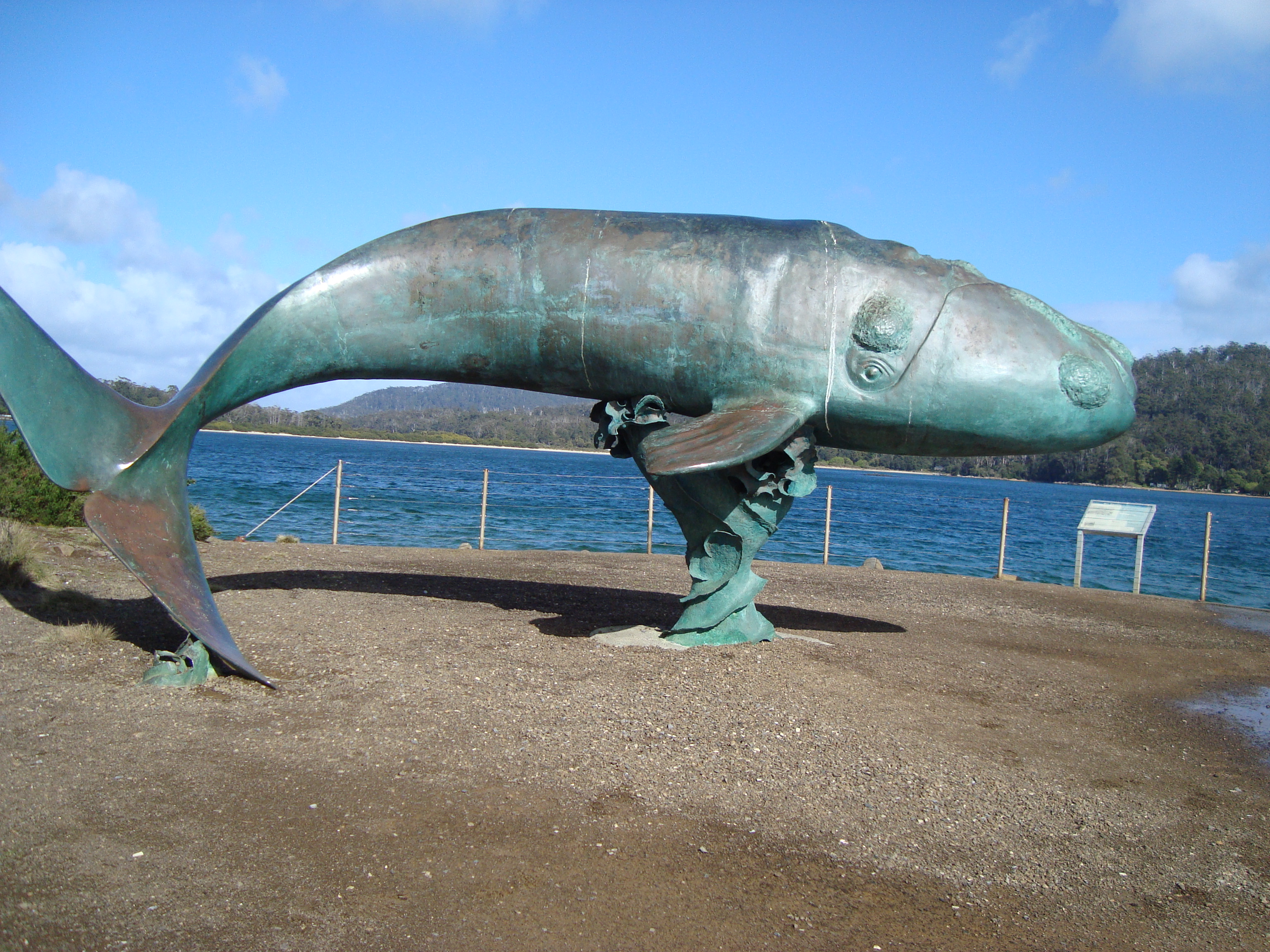 Right Whale Facts For Kids
