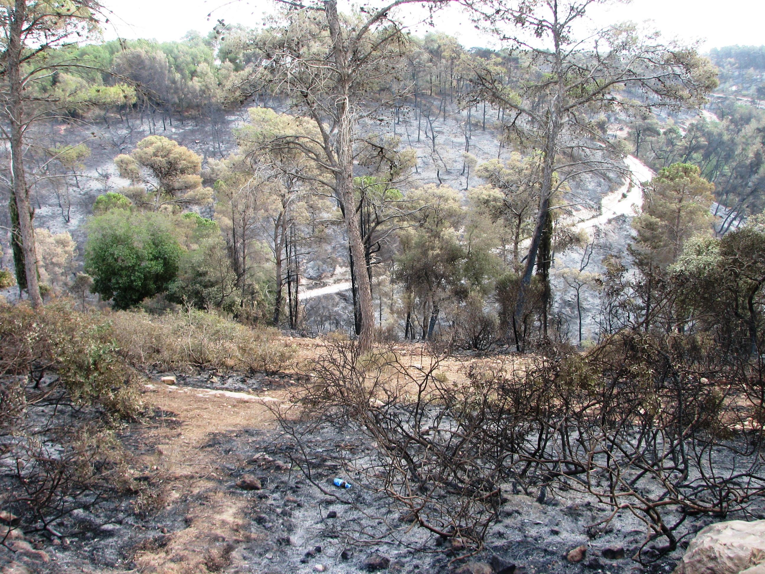 File:2010 Carmel forest - after fire near Isfiya (9).JPG ...