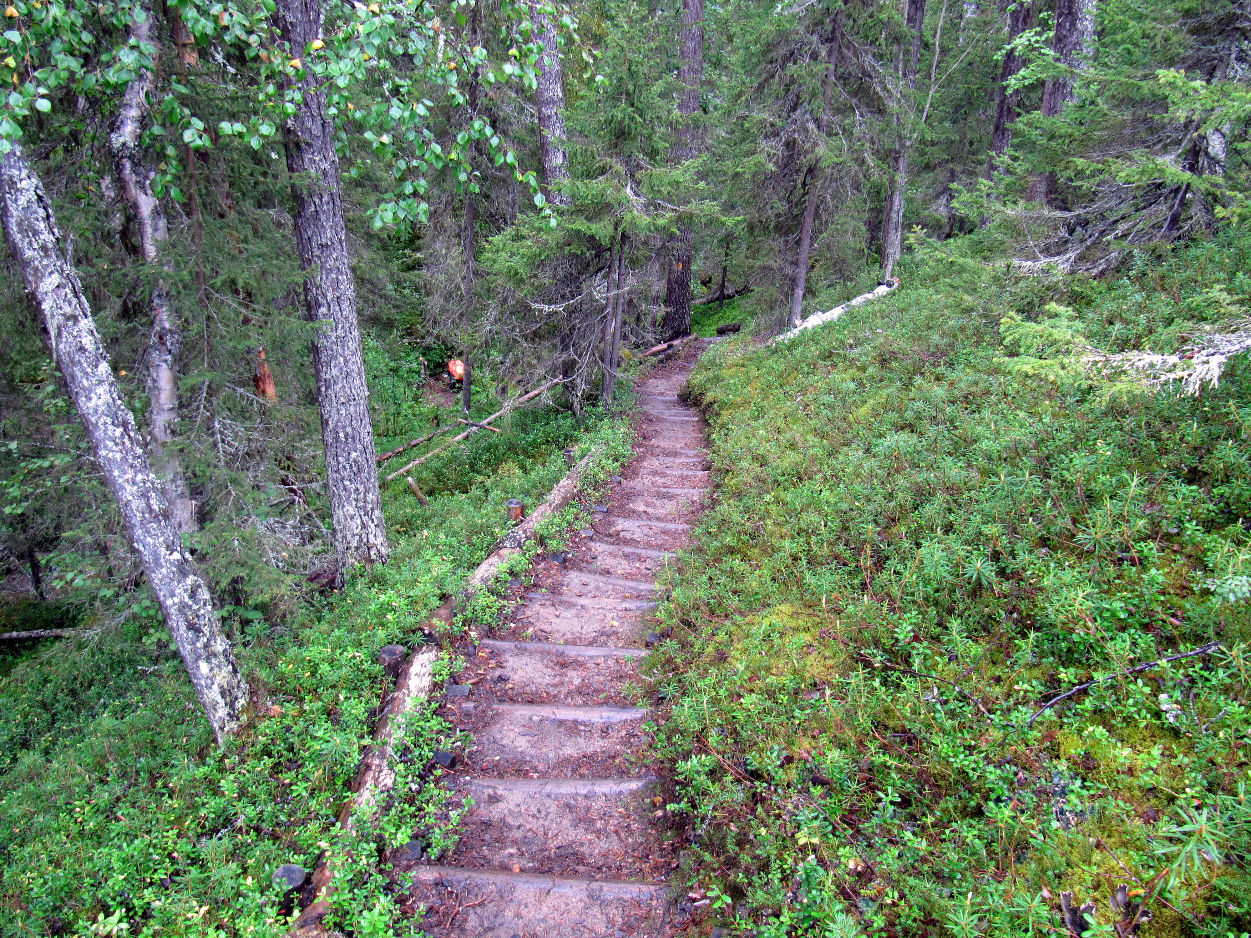 File:80km Karhunkierros Hiking Trail.jpg - Wikimedia Commons