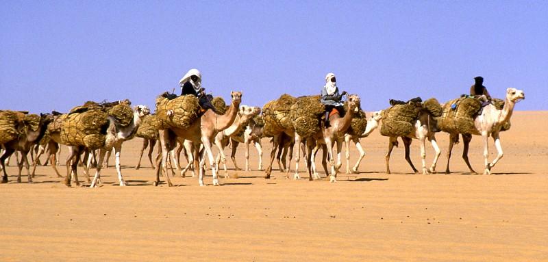 Camel Caravan In Sahara Desert Stock Photo | Getty Images