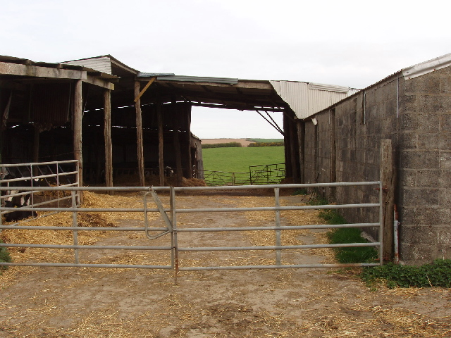 Here how to build a loafing shed for cows geka for Farm shed plans