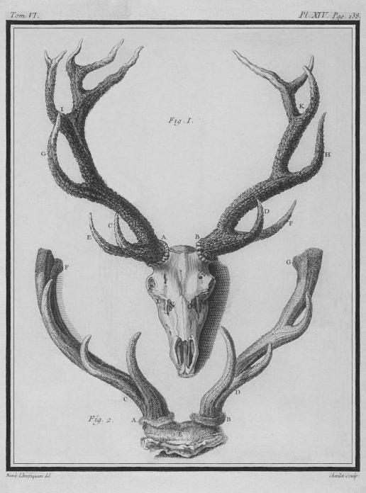 File cerf bois et tete squelette stag wood and head - Dessin bois de cerf ...