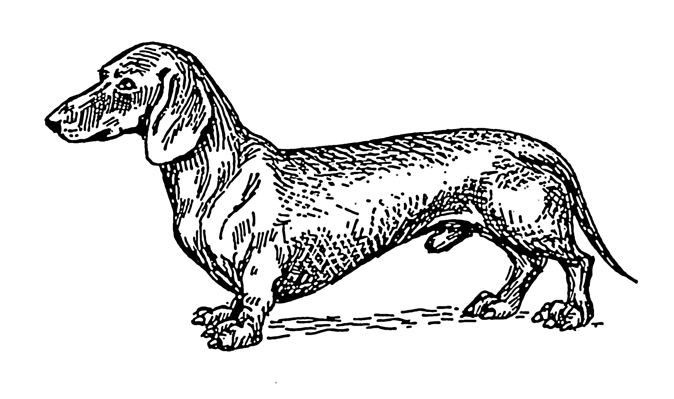 Line Drawing Dachshund : File dachshund psf wikimedia commons