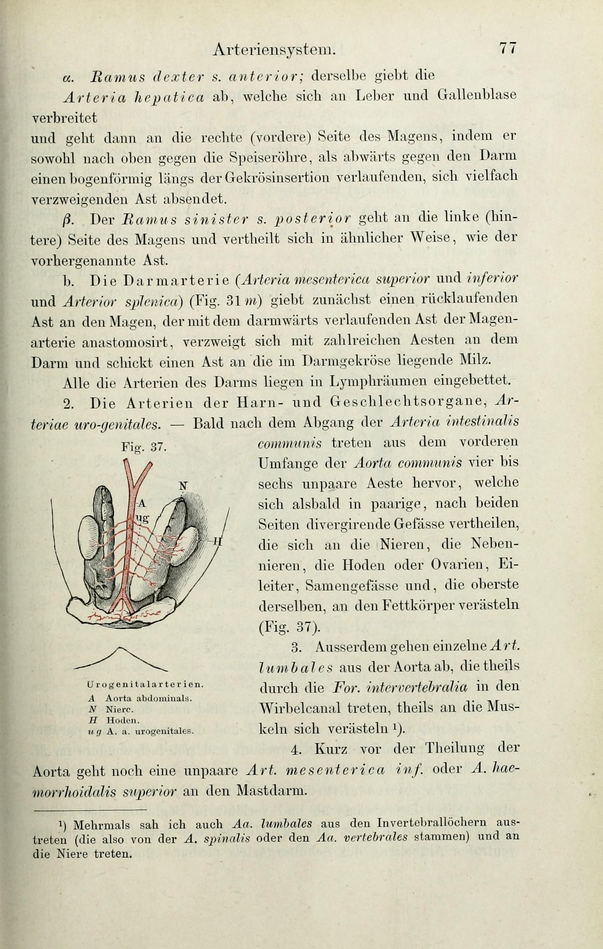 Charmant Zweige Der Abdominalen Aorta Anatomie Galerie - Menschliche ...