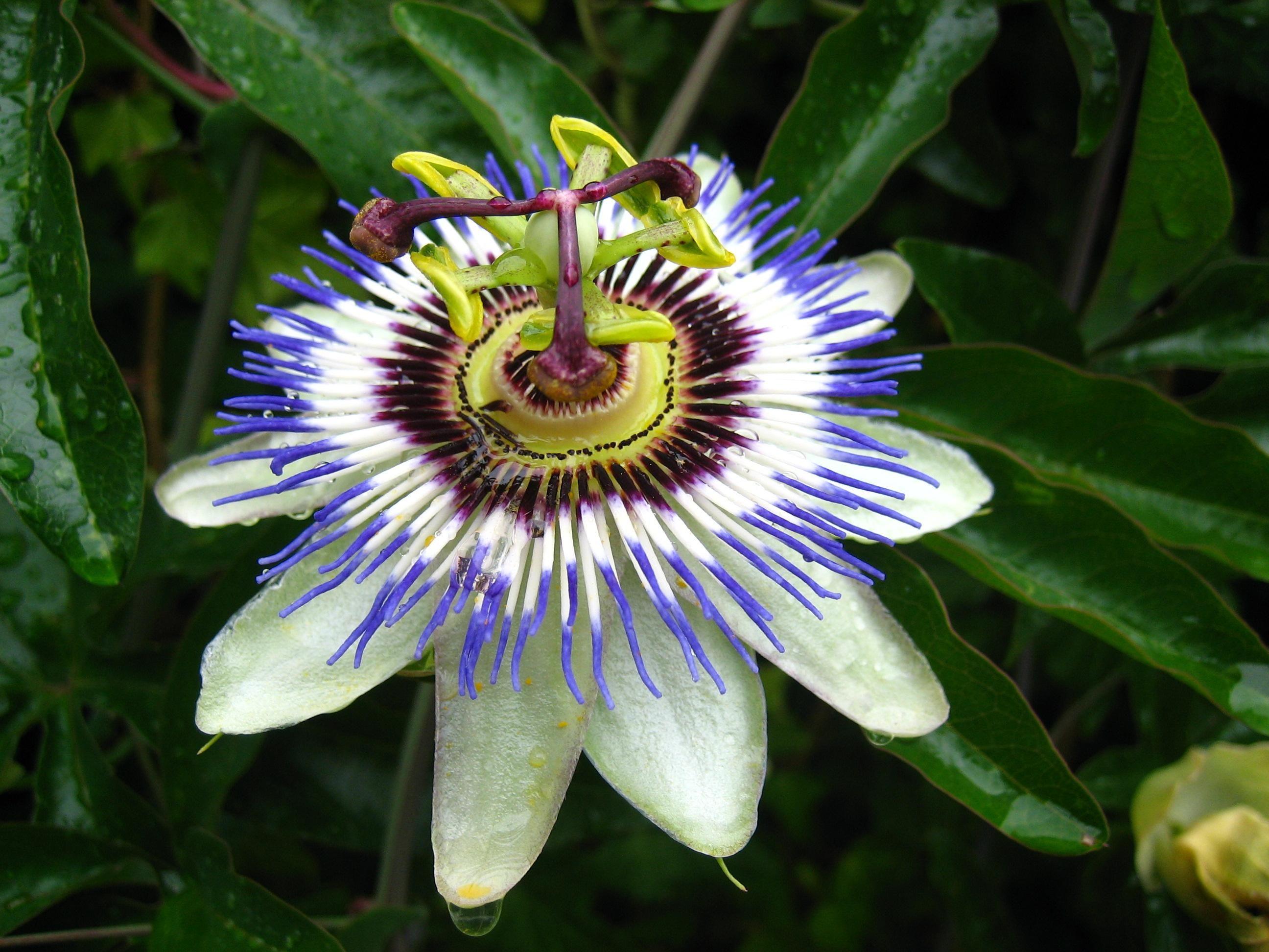 fileexotic flower  wikimedia commons, Beautiful flower