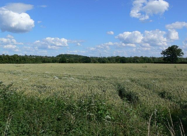 Farmland - geograph.org.uk - 491720