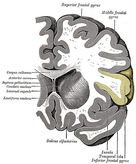 frontale hersenen
