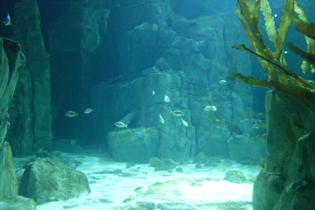 Description Istanbul Aquarium-3.JPG