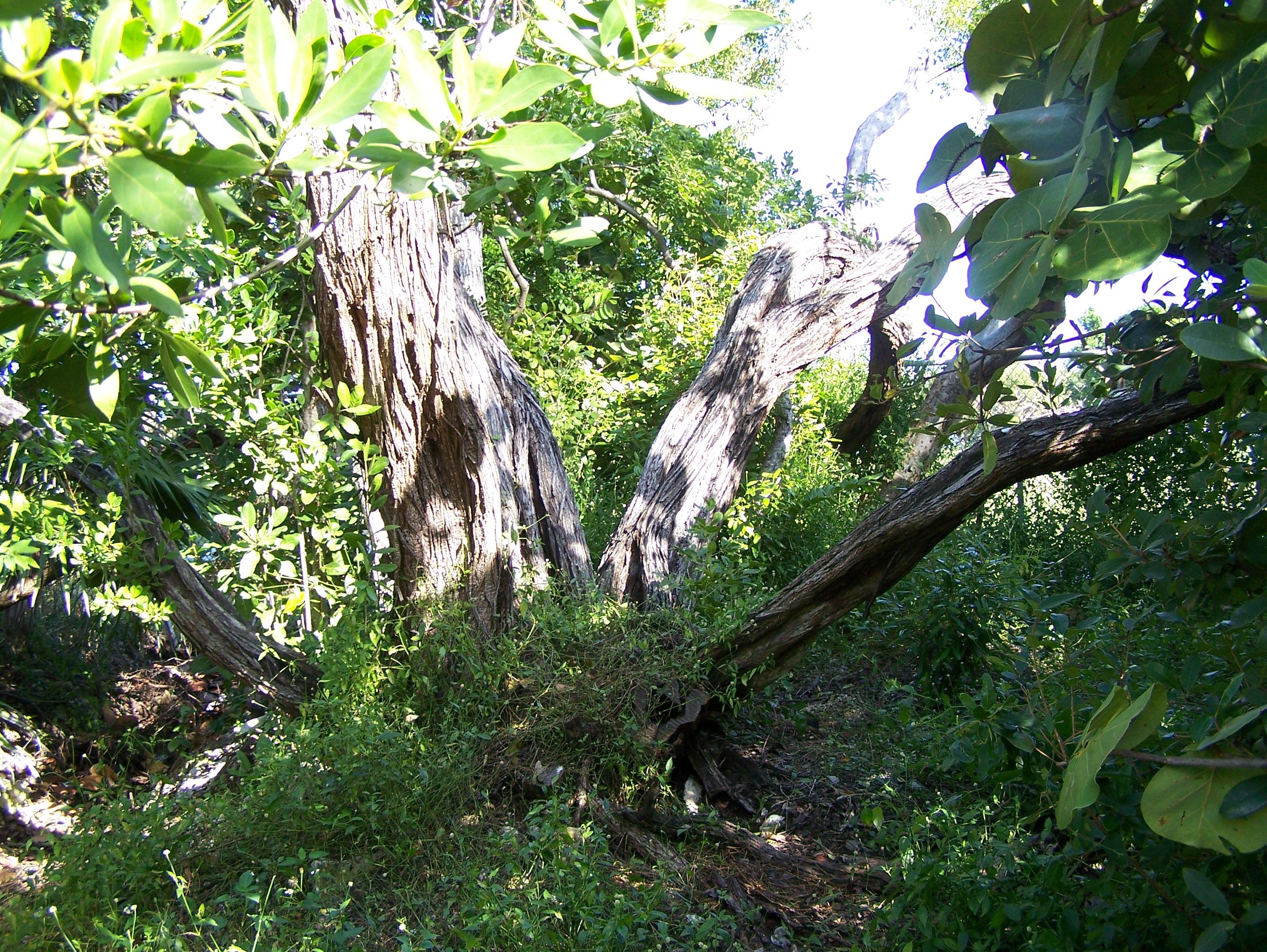 Attirant File:Key West Botanical Gardens